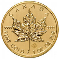Canadian Gold Maples